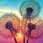 Wenjuan Sunshine Flower 5D DIY Diamond Painting, Modern Embroidery Paintings Rhinestone Pasted Cross Stitch (30×30cm)